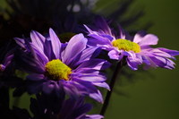 spring bouquet 1
