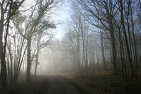 Misty morning 6