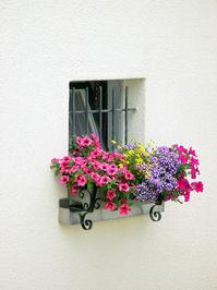 Window of Flowers 1