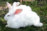 Easter Bunnies Series 1
