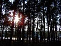 Forest meets sun