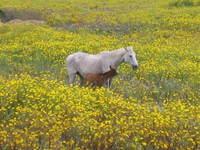 horses in sardinia 1