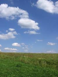 field 5