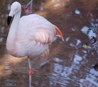 Amazonian birds 3