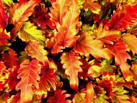 Fiery Colours
