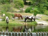 Horses in Sierras de Cordoba