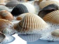 More shells 3