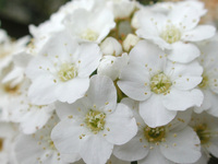 Spring Bloom 1