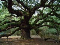 angel oak 3