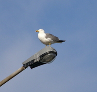 Seagull and the lampion street