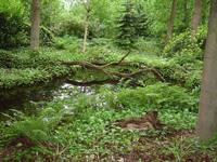 Efteling Nature