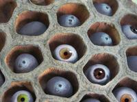 eyes in a basket