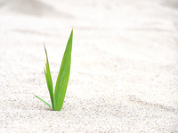 sand straw