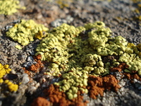 Algae on Rock