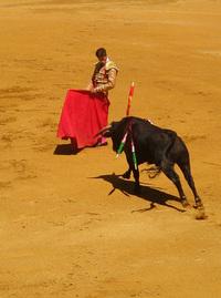 Bullfigther 3