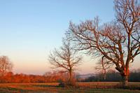 un matin a la campagne