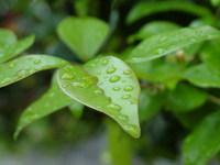Natureza molhada 1
