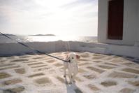Dog on the sunset