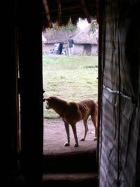 Kenya skinny dog 1