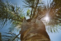 palmtree sunshine