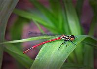 Dragonfly May 2005
