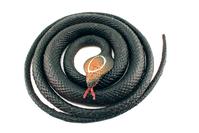 Rubber Snake 1