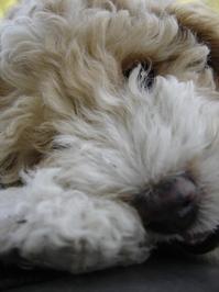 """puppy """"La China"""" 2"""