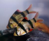 One Fish 1