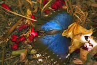bluebutterground
