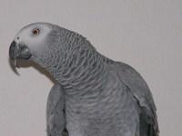Coco te Parrot 5