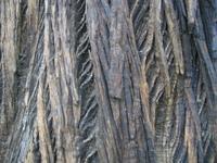 tree bark structure