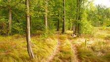wood path 3