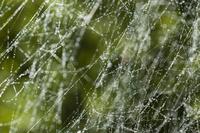 Cobweb 2