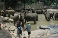 Elephant Orphange/Sri Lanka 1