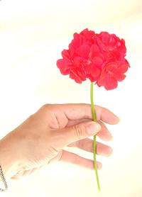 mano e fiore