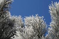 heavy frost 3