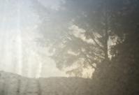 morning dew:: 2