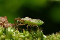 baby bug 2