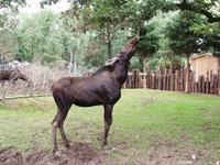 Moose zoo emmen 4