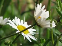 Flowers - Macro 304