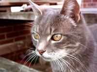 Digger - Cat