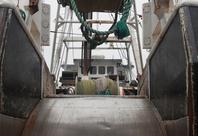 Newport Trawler