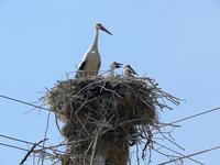 stork family 3