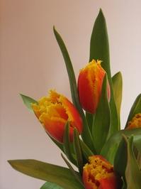 Bunch of tulips 3