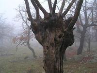 cres tree 4