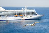 seagull & ship