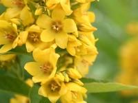 wild flowers 21