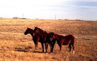 Western Kansas 2