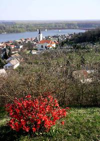 Batina and Danube river