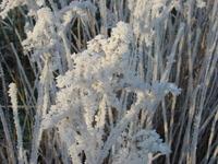Glazed frost 2